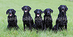 Riverlily Working Dogs