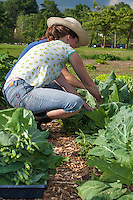 Young urban farmer working on a city market garden in Toronto.