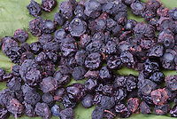 Blueberries Dry