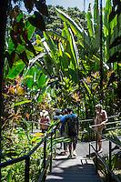 Tourists on the boardwalk near large heliconia plants at the Hawai'i Tropical Botanical Garden, Onomea, Big Island of Hawai'i.