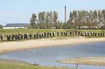 Foto: VidiPhoto<br /> <br /> HETEREN - Zo'n 160 mbo-studenten van diverse ROC's uit Noord-Nederland moeten woensdag en donderdag hun vakbekwaamheid tonen tijdens een eindoefening van de opleiding Veiligheid en Vakmanschap. Dat alles onder toeziend oog van instructeurs van de Luchtmobiele Brigade uit Schaarsbergen. Behalve dat ze onderweg en tijdens hun bivak maken krijgen met allerlei hinderlagen en 'overvallen', moesten ze bij het Betuwse dorp Heteren al peddelend de Rijn op en met volle bepakking zwemmend een 300 meter lang grindgat langs de rivier oversteken. Als de eindoefening is afgerond volgt nog een psychische en fysieke keuring, waarna de militairen-in-dop zich officieel kunnen aanmelden voor een opleiding bij Defensie. In de meeste gevallen is dat de Luchtmobiele Brigade in Schaarsbergen. Nog steeds is er bij Defensie te weinig geld voor de aanschaf van voldoende materiaal. Zo wordt de militaire rugzak van de studenten door henzelf bekostigd via het schoolgeld. Tot voor kort waren er zelfs te weinig plastic hoezen om de rugzakken tijdens het zwemmen droog aan de overkant te krijgen.