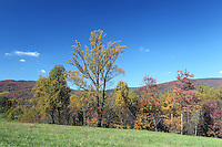 Fall colored trees line a field next to the Blue Ridge Mountains in Albemarle County, VA.  Photo/Andrew Shurtleff