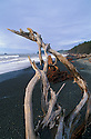 Driftwood on Rialto Beach, Olympic National Park, Washington.