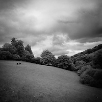 Woodland, Exmoor | Black and White Photography