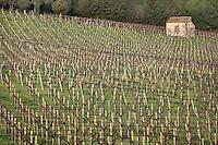 "Vineyard of the farm ""Tenute Pispisa"", Pispisa mountain, Calatafimi-Segesta, province of Trapani, Sicily, Italy. Picture by Manuel Cohen"