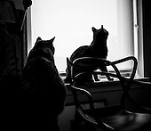Even with the blinds drawn to ward off the heat of the sun the girls know when a cicada lands nearby, Alexandria, VA