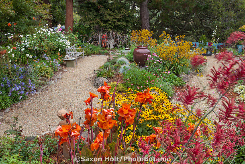 Gravel path around colorful California back yard garden island bed with orange and yellow flower perennials, Canna, Anigozanthos, Rudbeckia; Schneck Garden