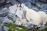 Calgary Zoo Animals. Photo Credit: Sergei Belski