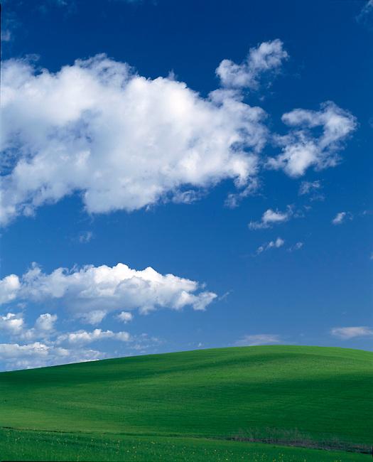 Green Hills in Carneros region
