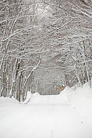 A snowy row through a tunnel of trees near Copper Harbor Michigan in winter.