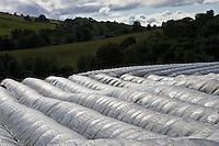 Polytunnels on a fruit farm in Perthshire, Scotland