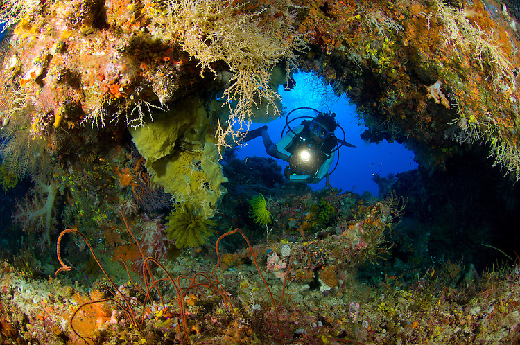 A diver peers through a coral encrusted archway or swimthrough, Fathers reefs, Kimbe Bay, Fathers reefs, Kimbe Bay