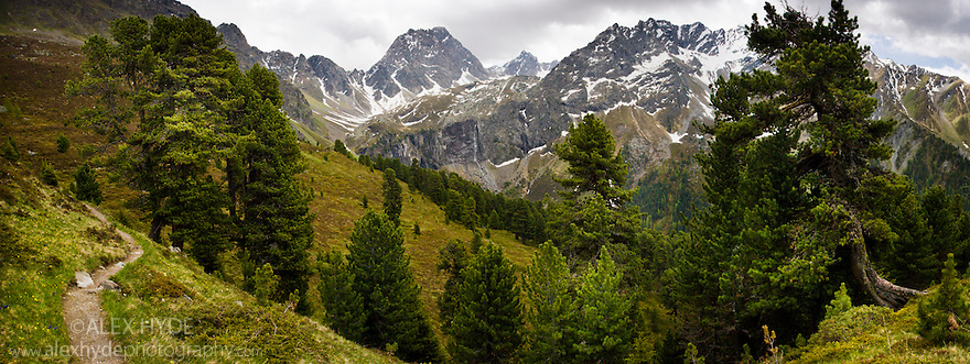 Alpine pine forest leading up to the Feichtener Karlspitze (2916 metres),  Nordtirol, Tirol, Austrian Alps, Austria, June.
