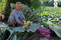 Woman arranging Lotus flower by water lily pond (Licence this image exclusively with Getty: http://www.gettyimages.com/detail/83154204 )