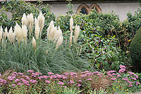 Cortaderia selloana + Sedum 'Joyce Henderson' in landscape border with Phytolacca americana (pokeweed) against wall