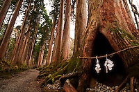 In the avenue of ancient cryptomeria trees leads to the Inner Shrine at Togakushi, sacred paper garlands hang at the opening of a hollow tree, Nagano, Japan.<br /> <br /> (title translation Ryuichi Abe &amp; Peter Haskel)