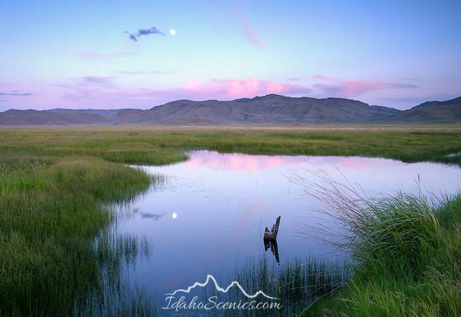 Idaho, South central, Camas County, Fairfield. A full moon reflects in a pond on the Centennial Marsh at dusk.