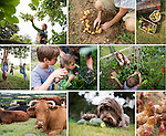 CLIENT: HIGHER NEWHAM FARM  // <br />