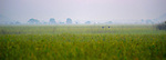 Morning dawns as workers walk through a rice field on their way to harvest rice in the Cambodian village of Talom.