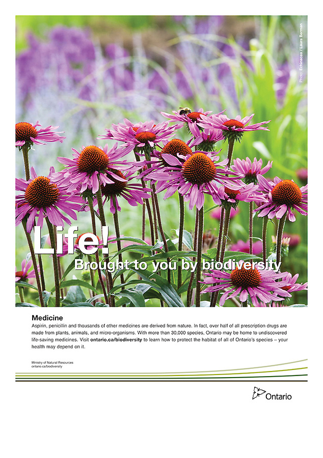 Poster for Biodiversity series, Ontario Ministry of Natural Resources