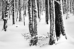 Trees with blown snow attached to one side of the bark