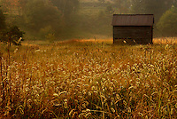 Old Shed in Meadow