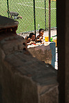 Children playing water games. Santa Marta Community, Rio