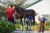 Trainer Michael MatzTending to Union Rags at Palm Meadows. Boynton Beach Florida. 03-01-2012