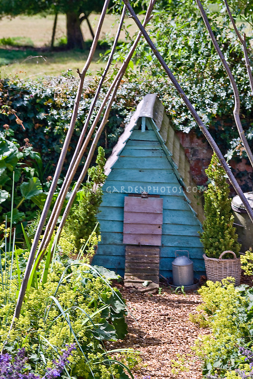 Blue Chicken coop hen house for farm animal birds, in backyard garden with Alchemilla mollis lady's mantle in green yellow flowers, teepee poles