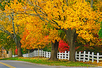 Southampton,  New York, Fall, Cobb Road, Fence, South Fork, Long Island