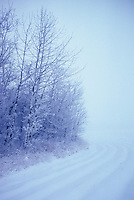 Farm field and tree windbreak on Prairies, as snowstorm subsides, St. Albert, Alberta.