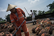 Factory workers sort out the harvested oil palm fruits at the Sipef oil mill in Sumatra, Indonesia. Photo: Sanjit Das/Panos