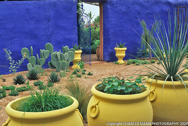 Large pots painted pale yellow and blue walls are part of the color scheme in the Moroccan garden Marjorelle, which was the inspiration for Mike Shoup when he created one of the demonstration gardens at  his Antique Rose Emporium nursery in San Antonio, Texas