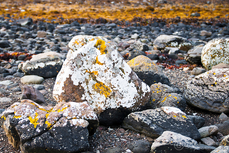 Yellow and white linchens on a dark rock. Yellow marine algae can be seen in background, at the intertidal zone. Found at the Isle of Skye, Scotland.
