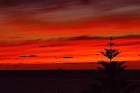 I took this photograph of the red sky sunset from my apartment window including the pine tree to show it was taken at Cottesloe Beach as they line the streets.