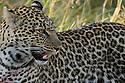 Kenya:  Masai Mara