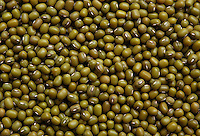 Semi di soia verde..Seed of green soybean..  .