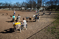 Austin Dog Parks - off leash areas in Austin to enjoy with your dog - Stock Photo Image Gallery