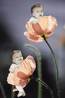 Digital composite image of baby girls sitting in Icelandic poppies.