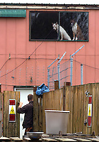 Steve Markwell, owner of the Olympic Animal Sanctuary in Forks, WA is seen going inside the facility on December 16, 2013.  He remained in there for almost an hour. No exact numbers on how many dogs are inside are known but a friend of his who has been inside estimates around 125.  Markwell has been under fire for neglecting the dogs after volunteers filed a complaint in 2012. The City of Forks police department investigated and found horrific conditions but were unable to do anything about it because the state governing animal sanctuaries are very lax.