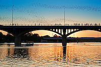 The Austin bat phenomenon all started in 1980, when the team of engineers designing the Congress Avenue bridge unknowingly created the crevices that would soon become the home to the largest urban bat colony in North America.