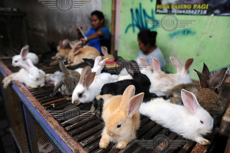 Rabbits for sale in Yogyakarta's bird and animal market.