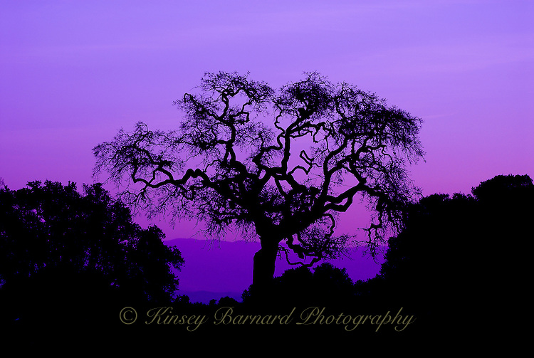 &quot;ROBLE REY&quot;<br />