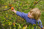 A 3 year-old girl apple picking.