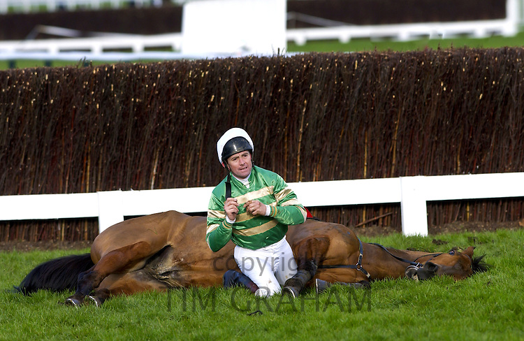 Jockey sits with dead racehorse after a fall on Cheltenham race track, England, United Kingdom
