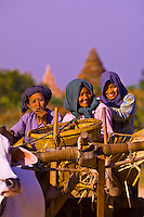 Women riding in Oxcart in Min Nan Thu village, Bagan, Myanmar (Burma)