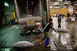 Tokyo, 1st of March 2010 - Tuna at Tsukiji wholesale fish market, biggest fish market in the world. 3:20 a.m, frozen tunas taken out of a refrigerated truck in front of the auction area.