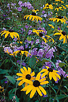Summer wildflowers along the Blue Ridge Parkway, North Carolina