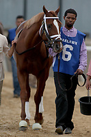 HOT SPRINGS, AR - MARCH 18: Untrapped #6, before the running of the Rebel Stakes race at Oaklawn Park on March 18, 2017 in Hot Springs, Arkansas. (Photo by Justin Manning/Eclipse Sportswire/Getty Images)