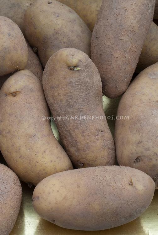 Potato 'Mayan Gold' (Solanum)